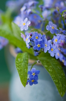 Forget-me-not bouquet in glass jars on a wooden table