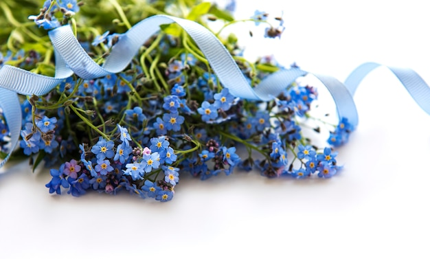 Forget-me-not flowers  on white  background