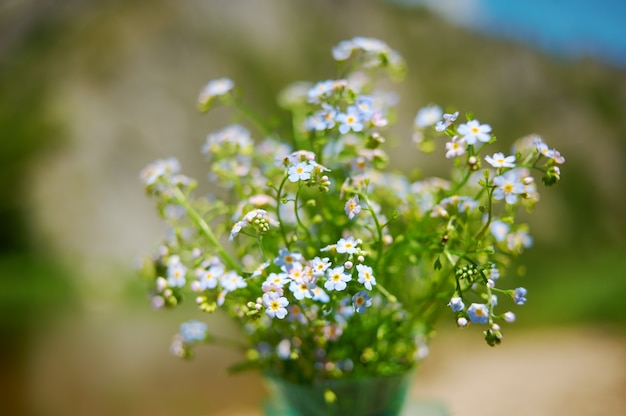 Forget-me-not in front of natural dark green nature