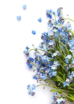 Forget-me-nots on white background Premium Photo