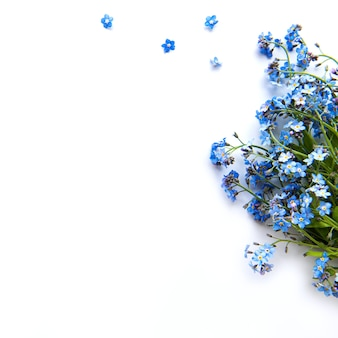 Forget-me-nots on white background