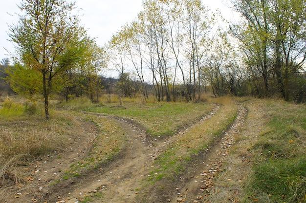 가을 숲에서 갈래 시골 길