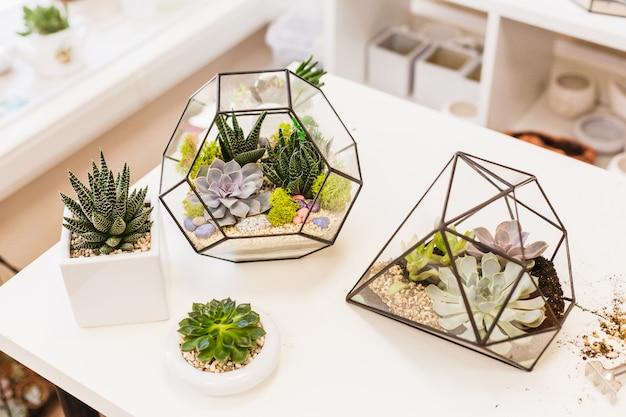 植物とインテリア、多肉植物、砂、土、植物用のガラスと金属の形態。家またはオフィスの装飾とインテリアデザイン。植物を植えてデザインを作成する
