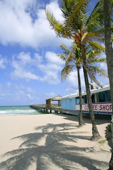 Fort lauderdale beach cafe with tropical palm trees