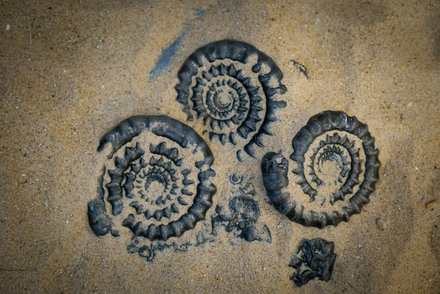 Fossil ammonite for fuel and gas industry
