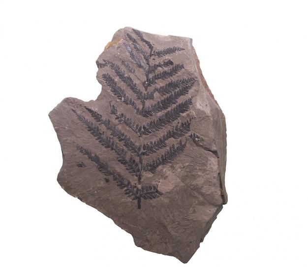 화석 암모나이트 클리핑 경로와 격리