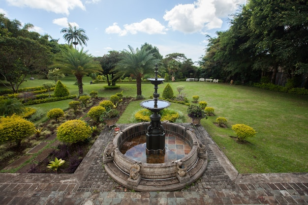 Fountain garden and palm trees