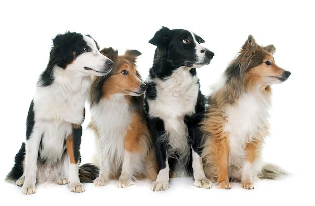 Four beautiful dogs
