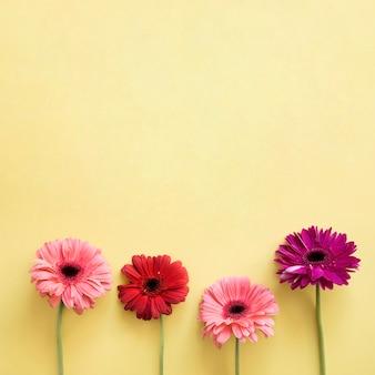Quattro bellissimi fiori