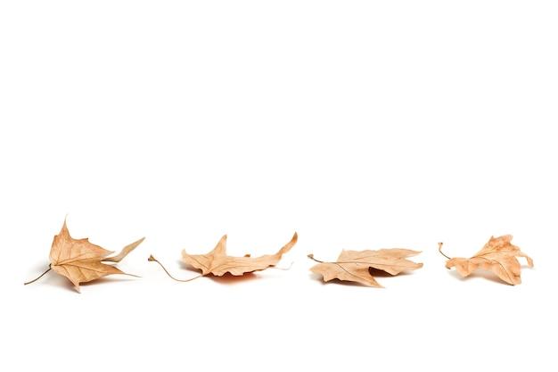 Четыре коричневых листа, изолированные на белом фоне