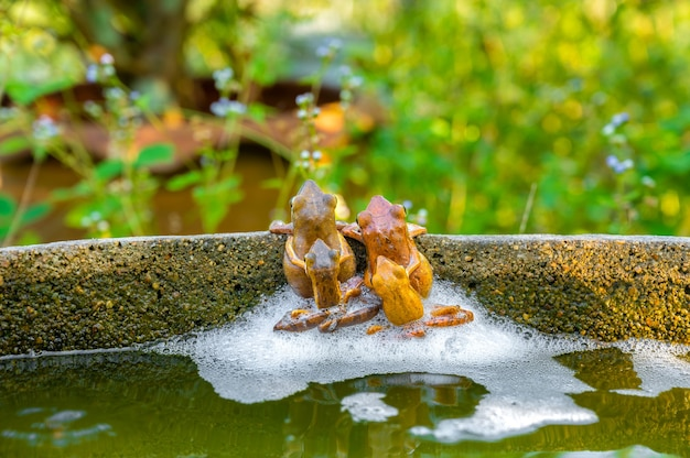 Four common toad frogs pairing breeding in the pond wildlife scene from nature