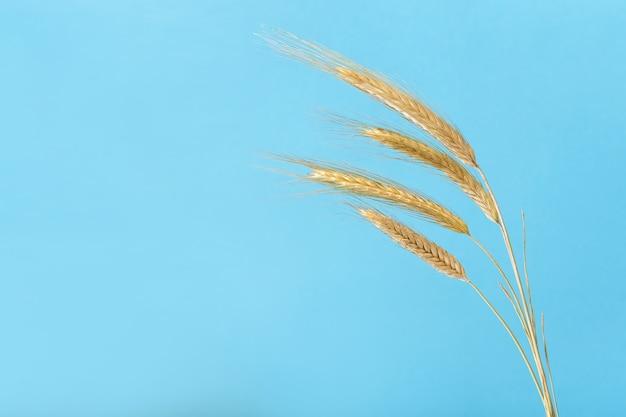 青い背景の上の小麦の4つの耳