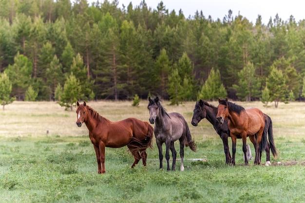 ぼやけた森を背景に緑の牧草地に4頭の馬