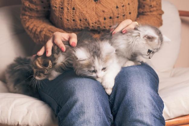 Четыре котенка на коленях девушки крупным планом
