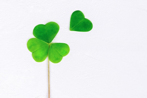 Four leaf clover to be on white, copy space