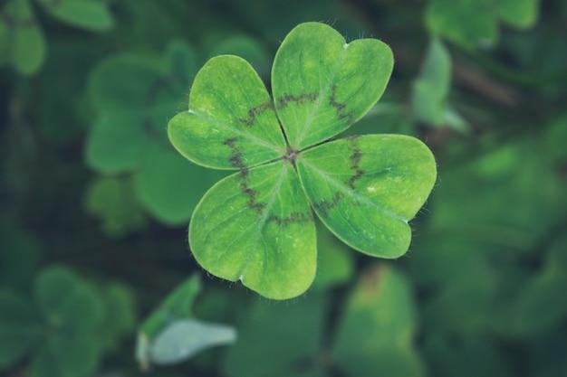 緑のクローバーの背景に黒のストリップと四つ葉のクローバー