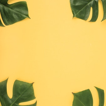 Four Monstera leaf on yellow background