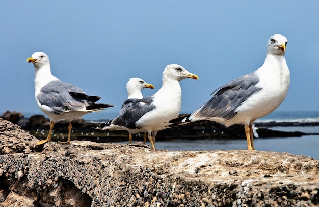 Four seagull looking in four direction