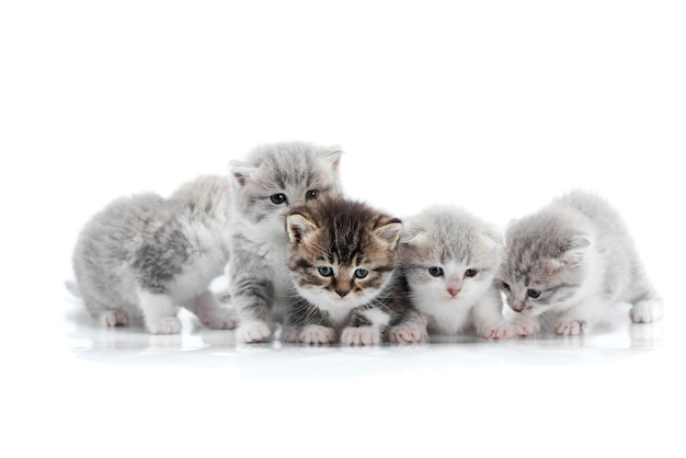 Four small cute grey kittens and one dark brown kitten are posing