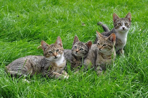 草の中に座っている4匹の縞模様の子猫