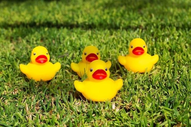 Четыре желтые резиновые утки на траве
