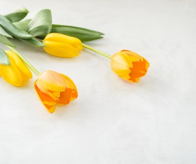 Four yellow tulip flowers on white table