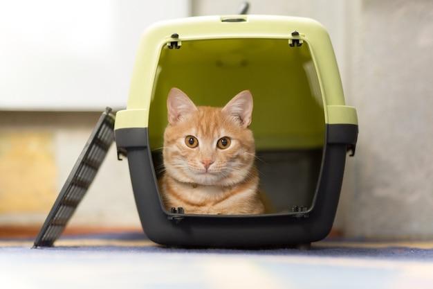 플라스틱 캐리어 상자 안에 폭시 빨간 머리 고양이