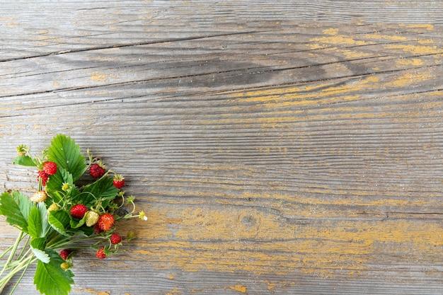 Fragaria vesca、ヨーロピアンストロベリー、ウッドストロベリー。緑の背景に熟した光沢のある赤いベリーと野生のイチゴの茂み。屋外で熟した赤いベリーのクローズアップ。