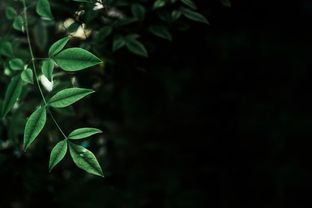Fragile leaves on black background