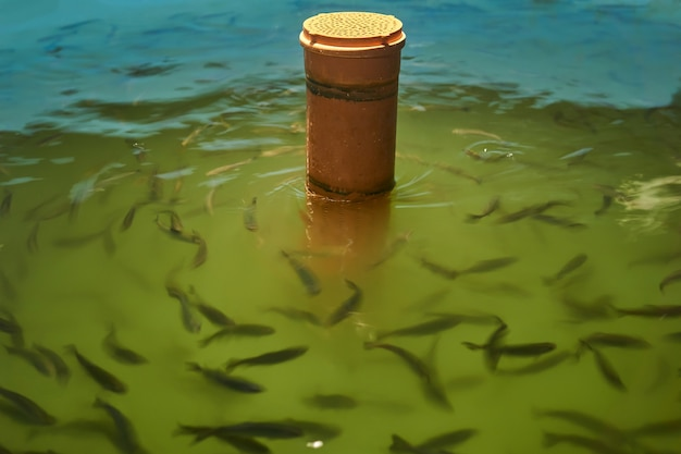 어류 부화장에서 어린 송어가 있는 저수지 조각