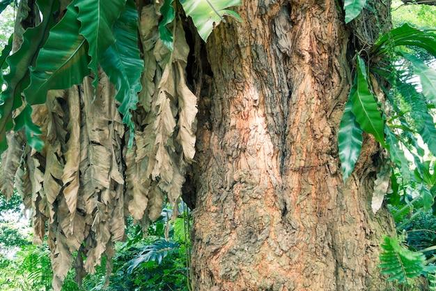 シンガポールの緑の熱帯公園の巨大な木の断片
