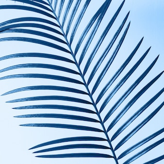 青の背景にフラグメントパーム支店。抽象的な背景