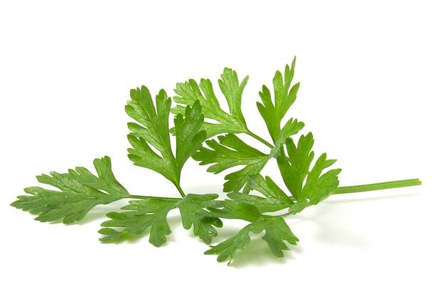 Ароматная зелень для украшения блюд, лист петрушки на белом фоне.