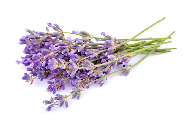 Fragrant lavender on a white background
