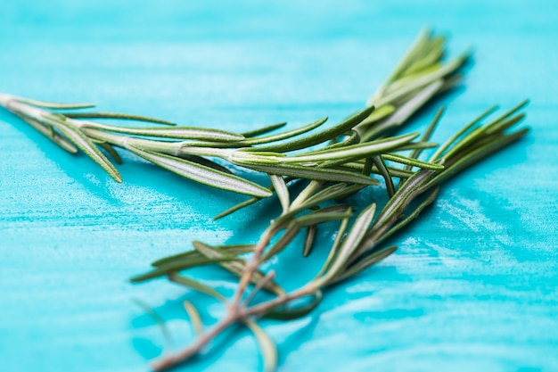 Fragrant rosemary herbs on white on turquoise wooden background