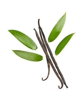 The fragrant vanilla and leaves isolated