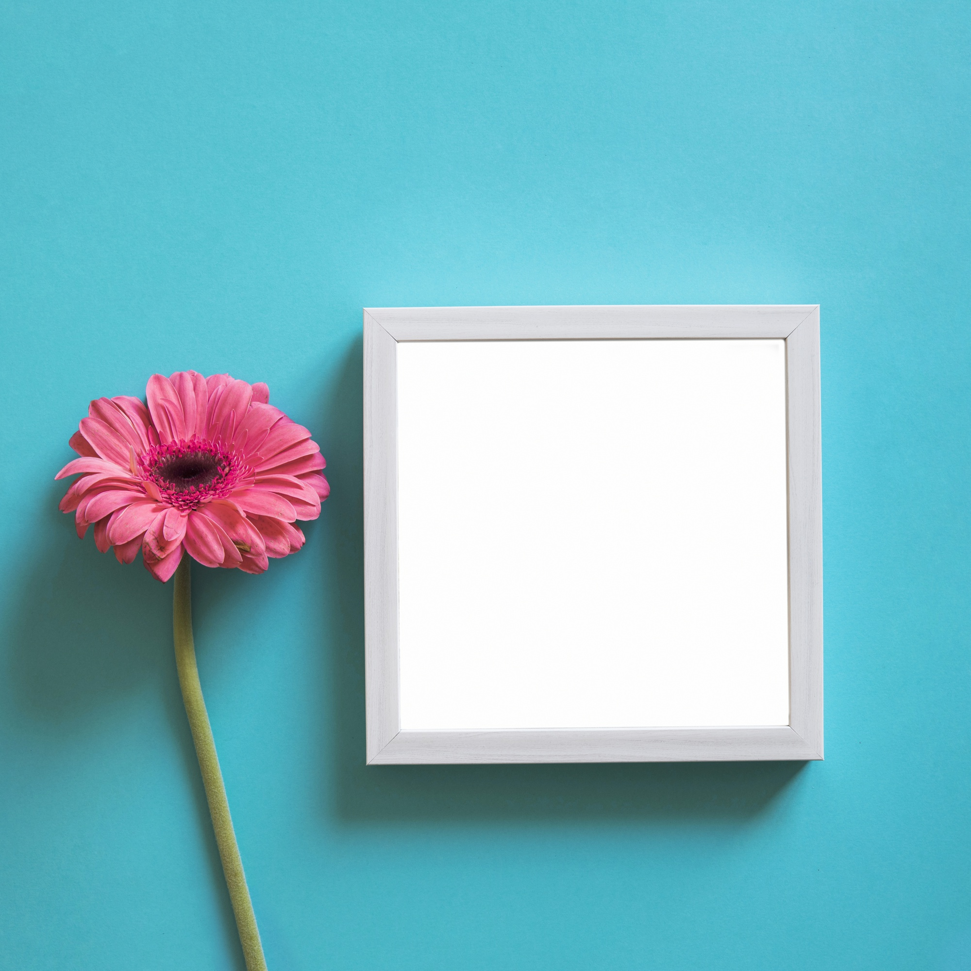 Frame and pink flower