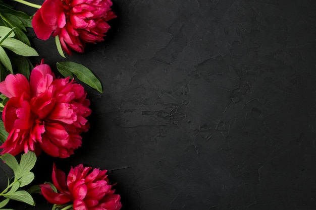 Frame of beautiful bright pink flowers peonies on a black graphite background. top view. space for text
