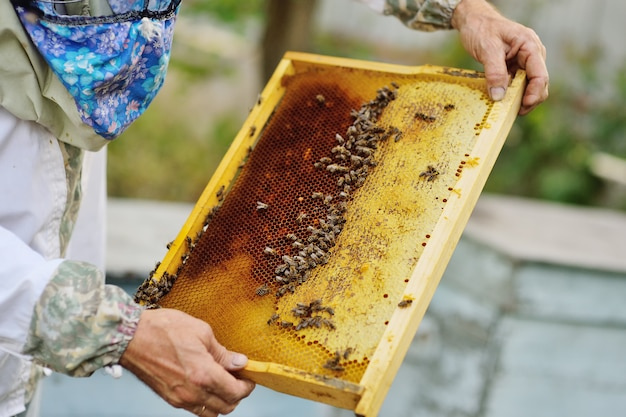 Frame for bees close-up in the hands of a beekeeper in the background of the sun and an apiary
