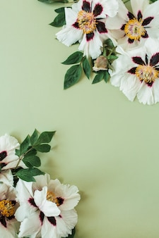Рамка границы из белых пионов цветов