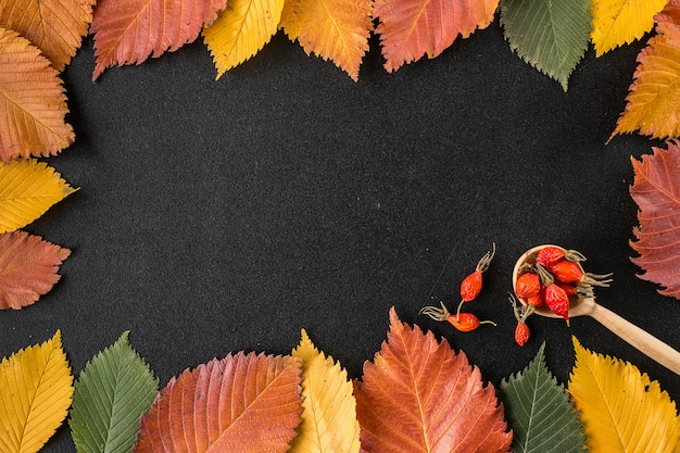 Frame composed of autumn leaves over black