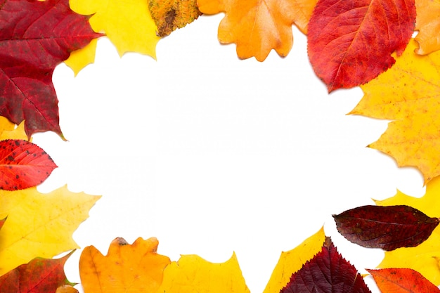 Frame composed of colorful autumn leaves foliage isolated on white background.