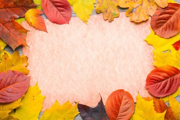 Frame composed of colorful autumn leaves foliage