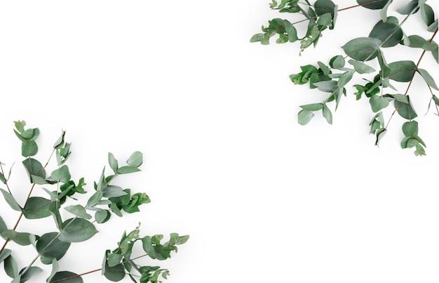 フレーム、白い背景に緑のユーカリの葉と枝で作られたコーナー。花の組成。フェミニンなスタイルのストックフラットレイ画像、上面図。スペースをコピーします。