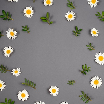 Frame of daisies and branches