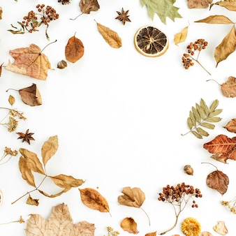 Frame of dry fall autumn leaves, petals and oranges on white surface