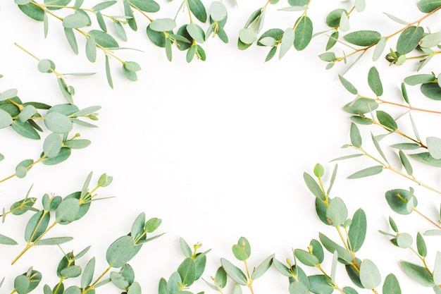 Frame of eucalyptus branch pattern on white background. flat lay, top view