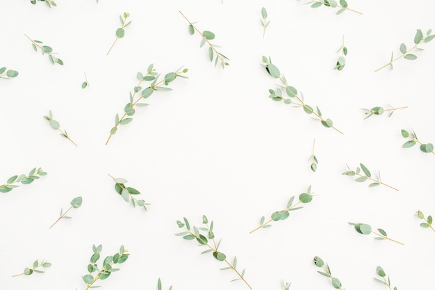 Frame of eucalyptus branch pattern with space for text on white background. flat lay, top view