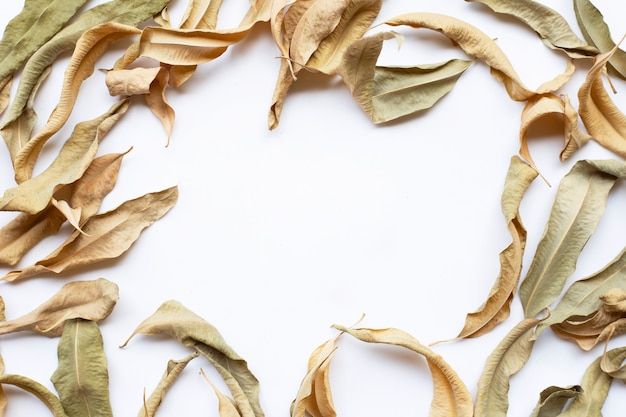 Frame of eucalyptus dry leaves with copy space on white