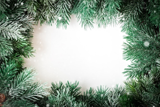 A frame of fir-tree branches on a white background.